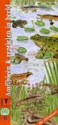 Bekijk details van Amfibieën & reptielen in beeld