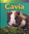 Bekijk details van Het leven van een cavia