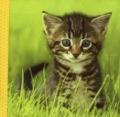 Bekijk details van Snoezige dieren knisperboekje