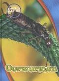 Bekijk details van Oorwormen