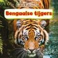 Bekijk details van Bengaalse tijgers